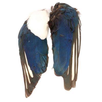 M. WINGS BIRD PICA-PICA BAETIS