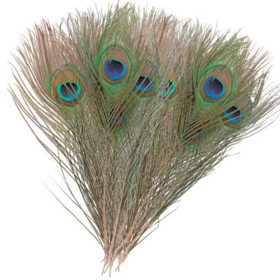 Peacock yeux Veniard